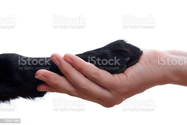 Handshake between dog and human picture id176551389?b=1&k=6&m=176551389&s=612x612&h=0fvsuf6ifzb2bld2fzbwdf3tdcuvzxvzwg3tzp2hmxk=