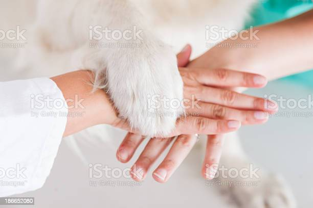 Handshake between dog and veterinarian hand picture id186652080?b=1&k=6&m=186652080&s=612x612&h=kxxx46othync8mlere6fvm68mfgjy8aa3blwmubn73c=
