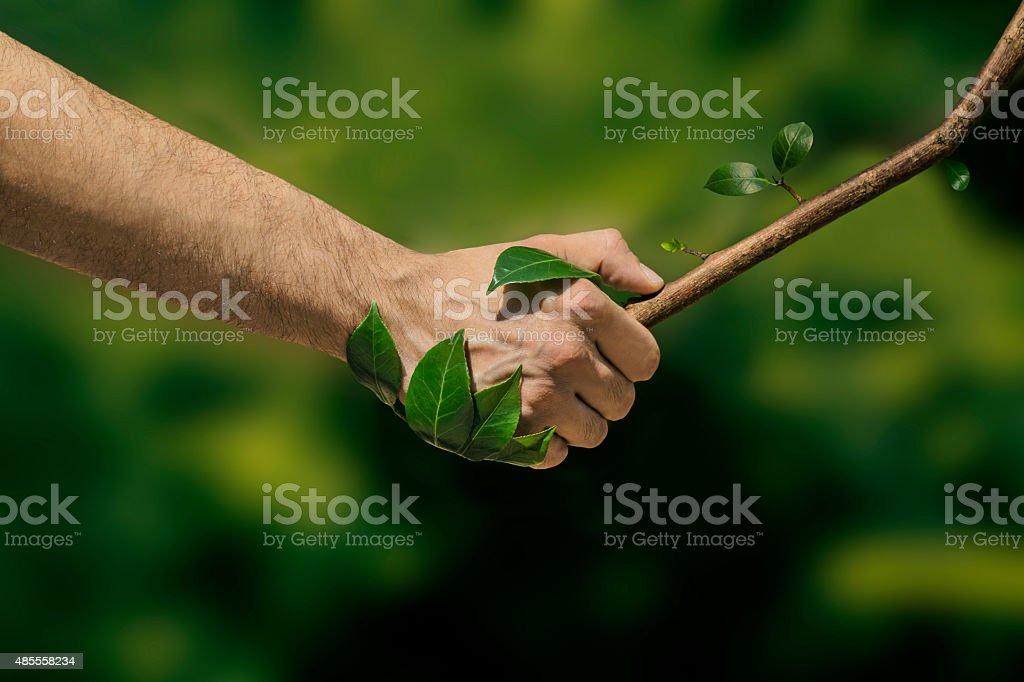 Handshake With Nature stock photo