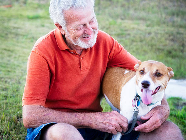 Handsome 79 year old Senior Man Petting His Dog stock photo