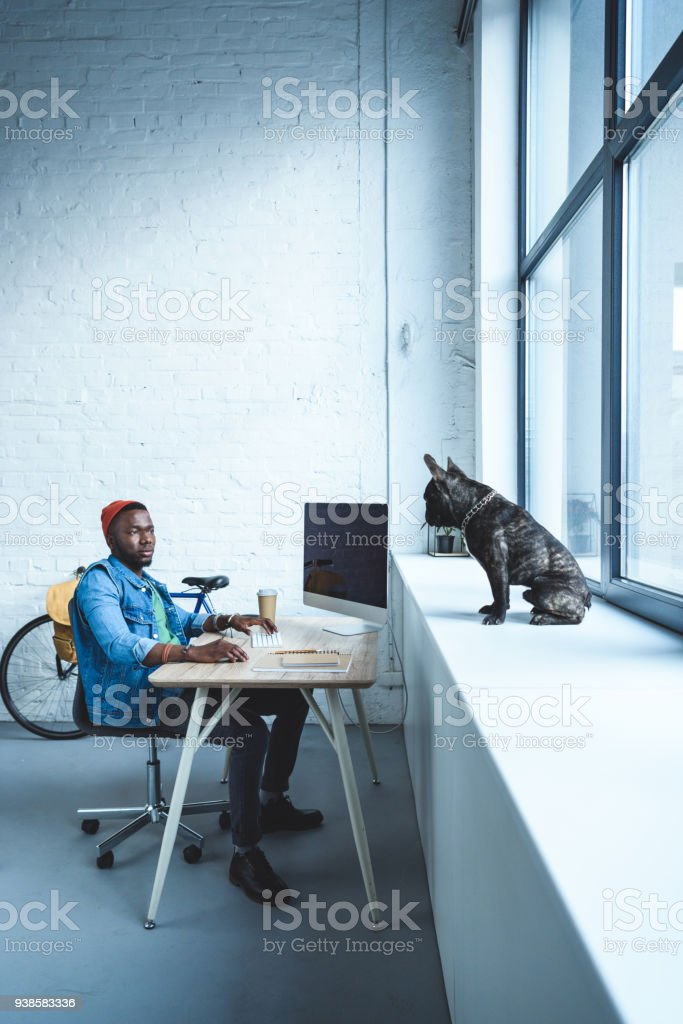 Handsome african american man working by computer while French bulldog sitting on windowsill stock photo