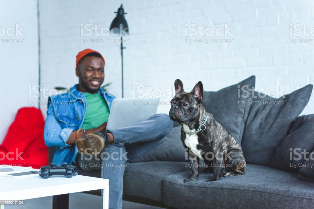Handsome african american man working on laptop while sitting on sofa with bulldog stock photo