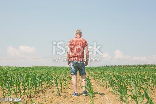 1094815168 istock photo Handsome farmer walks at his abundant field of growing green corn plant 1154813096