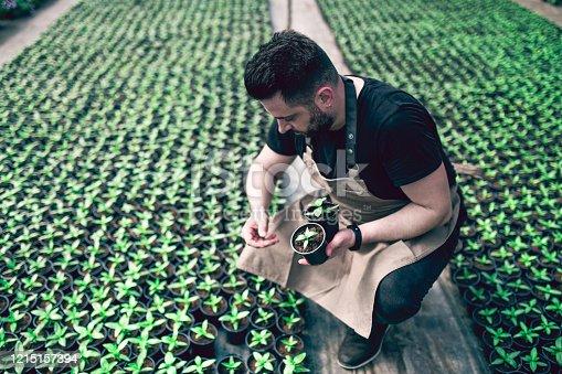 istock Handsome Gardener Picking His Best Flowers 1215157394