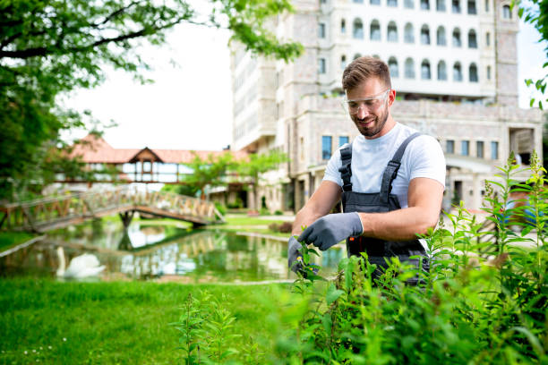 Handsome gardener trimming the bushes stock photo