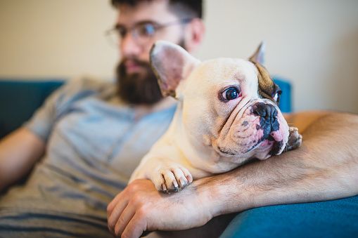 Handsome, hipster man sitting on the living room sofa with his dog, using a laptop