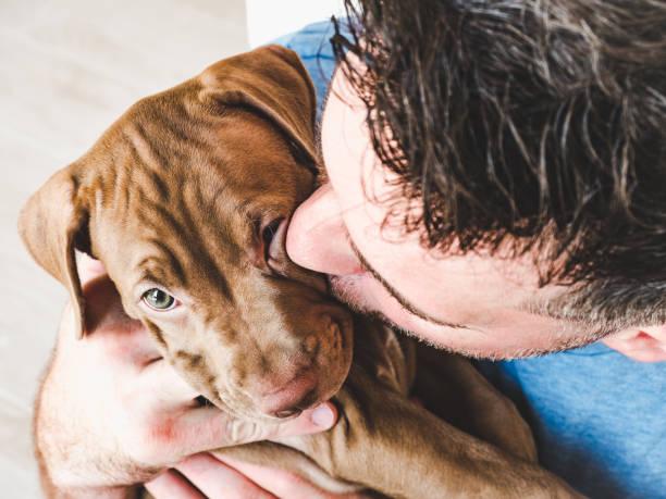 Handsome man and charming puppy studio photo picture id1166051112?b=1&k=6&m=1166051112&s=612x612&w=0&h=qg8riobl6v81mworlehl49nyh0dog 8g9rdgxkz0wpo=