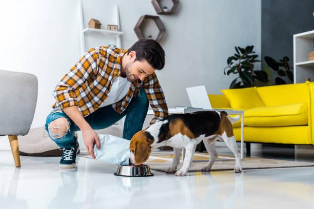guapo, lindo perro de la alimentación en sala de estar en casa - alimentar a tu perro fotografías e imágenes de stock