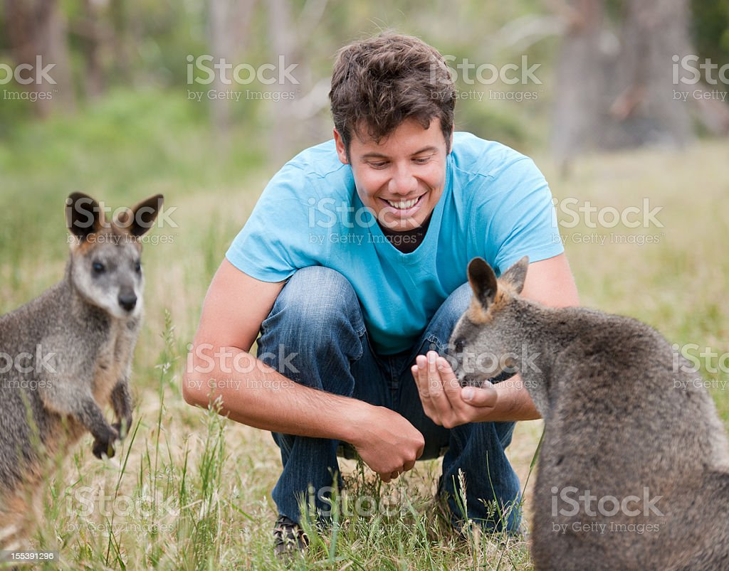 Handsome Man feeding Kangaroos, Outback Australia (XXXL) stock photo