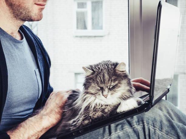 Handsome man holds a beautiful fluffy kitten on his lap picture id940929326?b=1&k=6&m=940929326&s=612x612&w=0&h= 68r sazx9 es3d0pepg8kvstrynnfgvwvf190fexfi=
