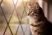 Handsome tabby cat sat by a window, with focus on eyes.
