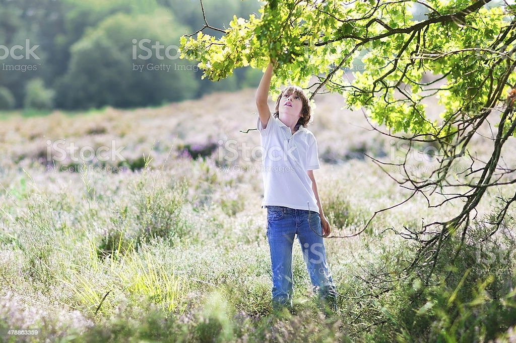 Handsome young boy picking acorns from an old oak tree stock photo