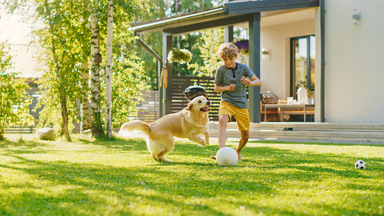 Handsome Young Boy Plays Soccer with Happy Golden Retriever Dog at the Backyard Lawn. He Plays Football and Has Lots of Fun with His Loyal Doggy Friend. Idyllic Summer House.