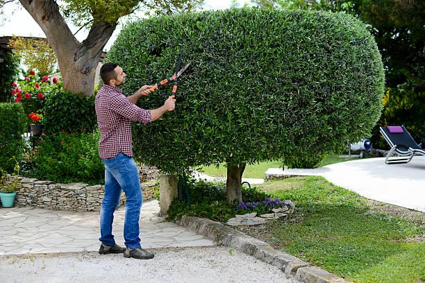 beau jeune homme jardinier bordure et lanscaping arbres avec des ciseaux ou sécateur - buis photos et images de collection