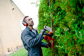 handsome young man gardener trimming and lanscaping green bushes