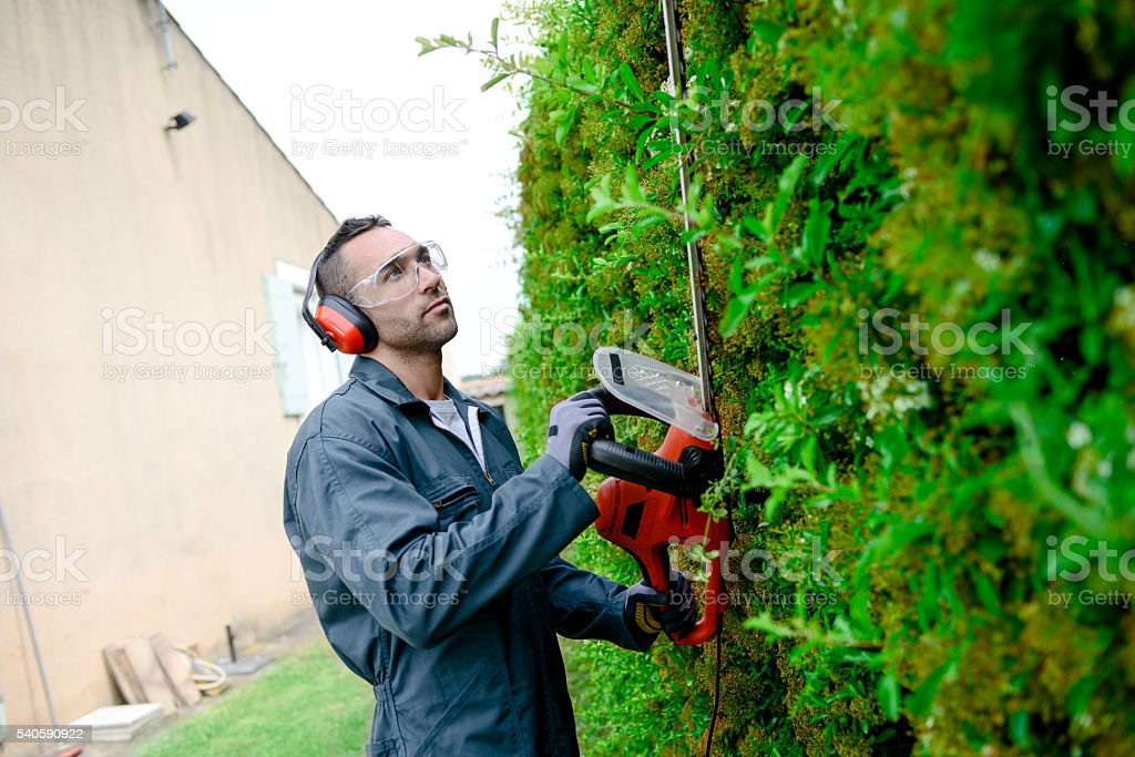 handsome young man gardener trimming and lanscaping trees with shears stock photo