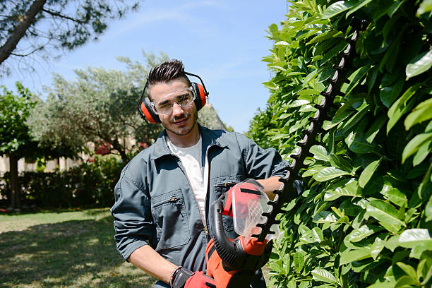 handsome young man gardener trimming hedgerow in a park outdoor handsome young man gardener trimming hedgerow in park outdoor hedge clippers stock pictures, royalty-free photos & images