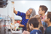 Ethnic female teacher helping elementary science students learning about chemistry in laboratory. She is showing them a scale model of the spinal column and pointing out vertebrae.