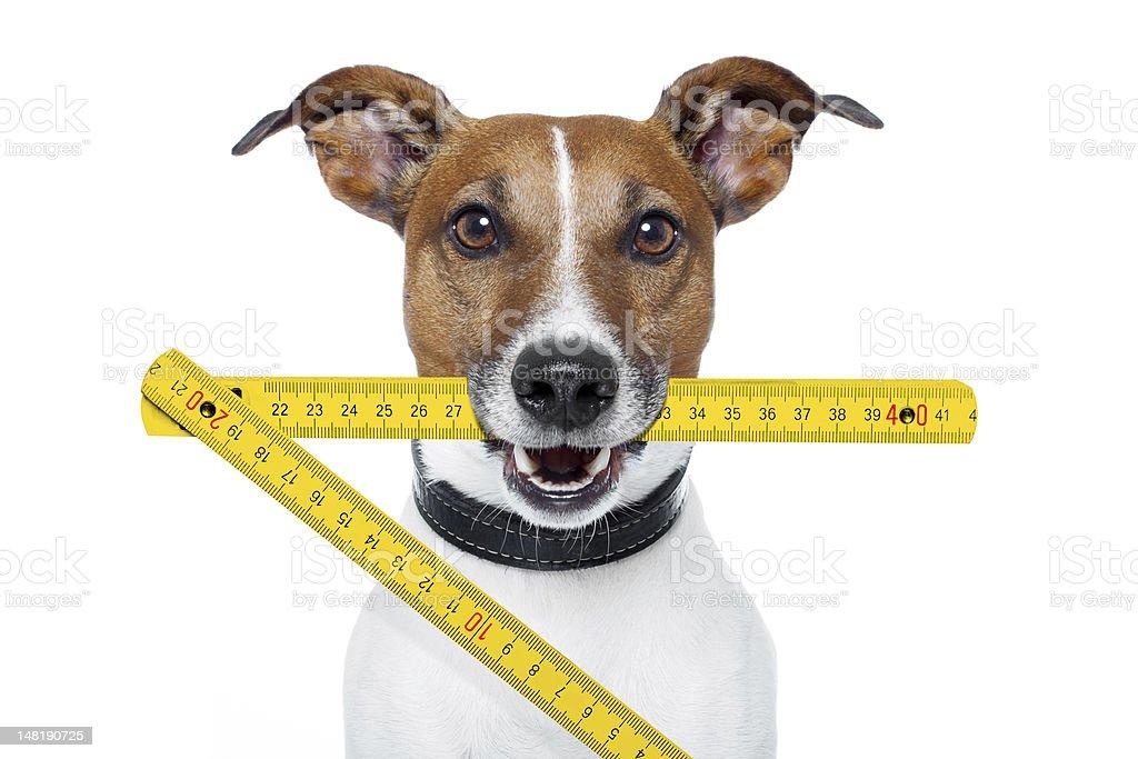 handyman dog royalty-free stock photo