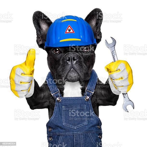Handyman dog picture id483596304?b=1&k=6&m=483596304&s=612x612&h=kc3b qozl6gmxpfk4x85qg0uciyv9 pnkncq g9lzji=