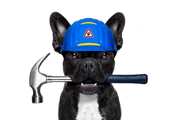 mann hammer hund - hundezubehör diy stock-fotos und bilder