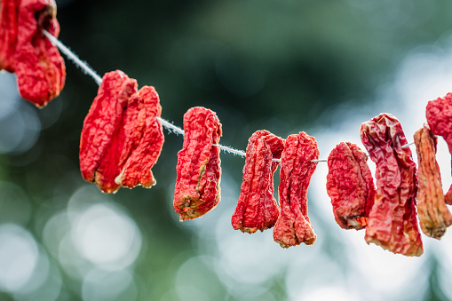 Trockenen Chilischoten Gehängt Stockfoto und mehr Bilder von Abnehmen