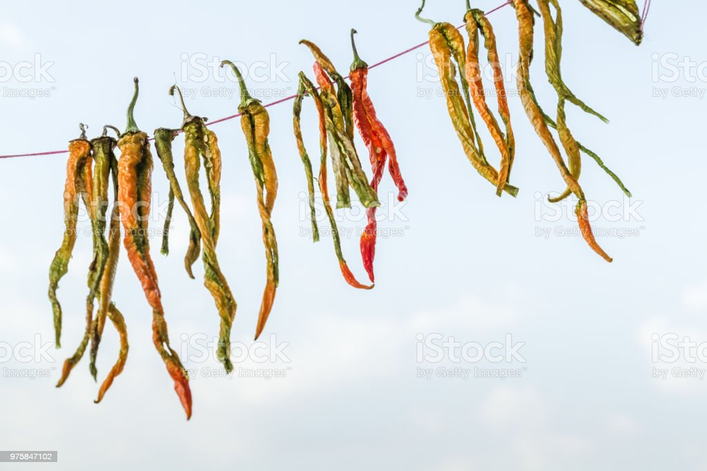 Erhängt trockene grüne Chilischoten - Lizenzfrei Abnehmen Stock-Foto