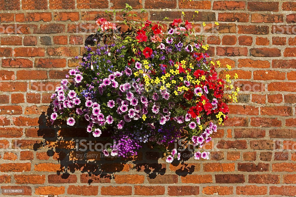 Blumenampel auf Wand – Foto