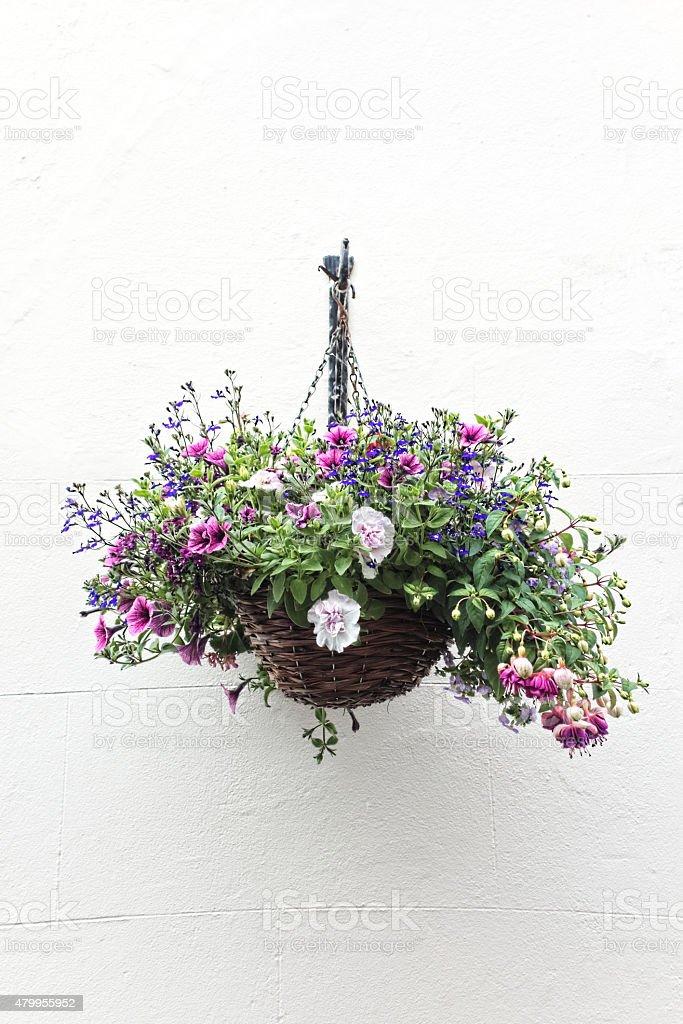 Blumenampel an der Wand – Foto