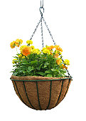 Orange and yellow flowers in a hanging basket with clipping path.