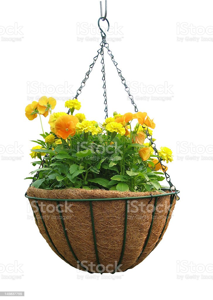Hanging Basket stock photo