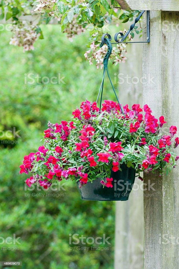 Hanging basket – Foto