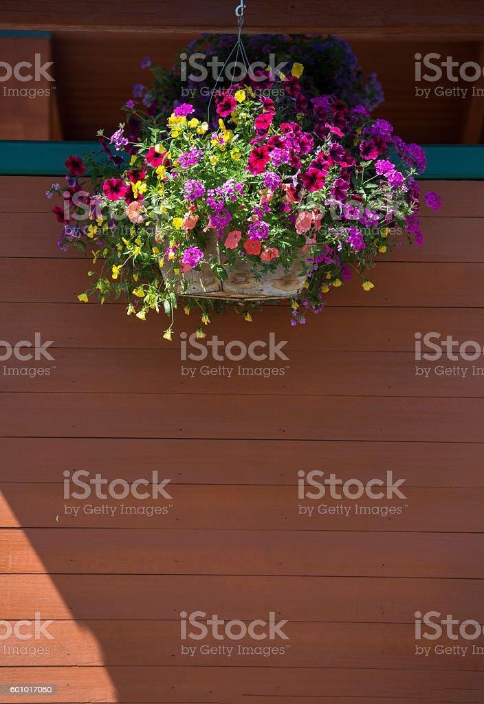 Hanging basket - Stock image – Foto