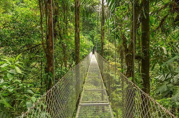 hanging bridge in costa rica - costa rica stockfoto's en -beelden