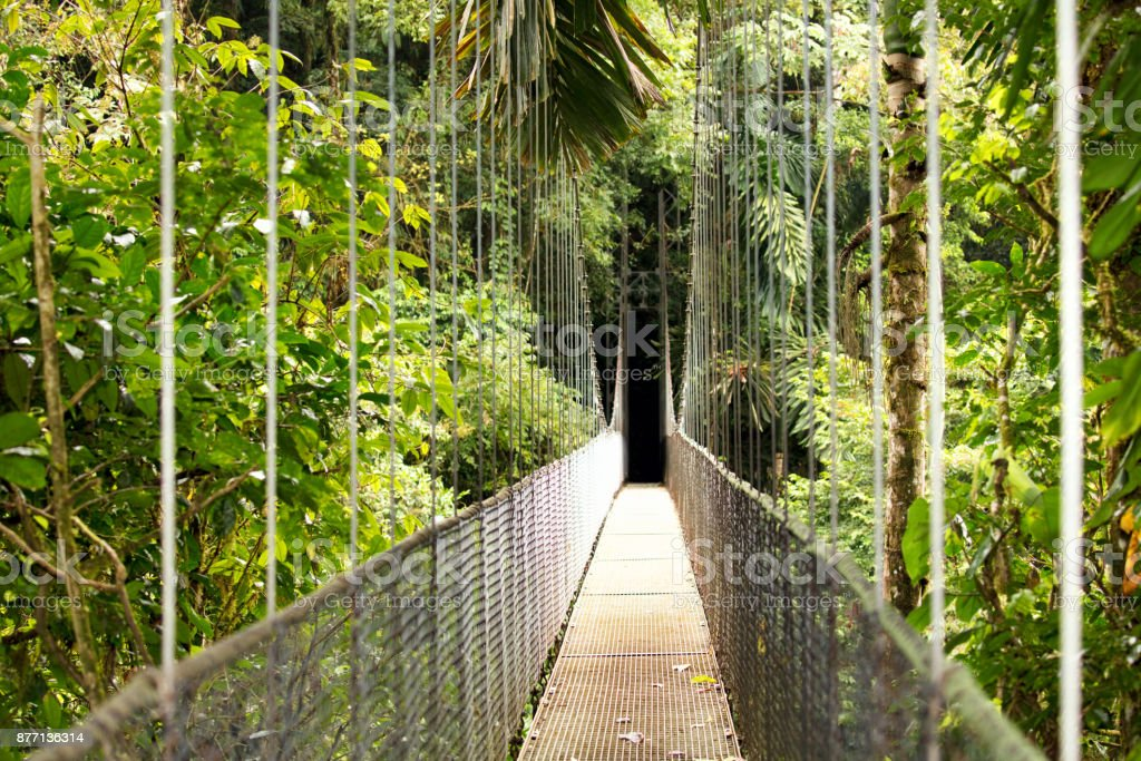 Hanging Bridge, Mistico Arenal Hanging Bridges Park,  Costa Rica stock photo