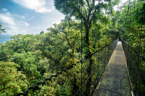 hanging bridge hanging bridge in the jungle wildlife reserve stock pictures, royalty-free photos & images
