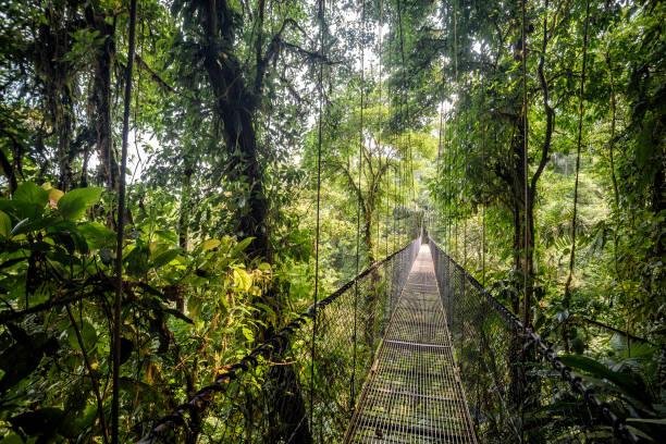 hanging bridge - заповедник дикой природы стоковые фото и изображения