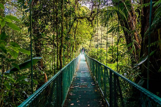 hanging bridges in cloudforest - costa rica - costa rica stockfoto's en -beelden