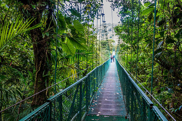 Hanging Bridges in Cloudforest Walking on hanging bridges in Cloudforest - Adventure in your vacation arenal volcano stock pictures, royalty-free photos & images