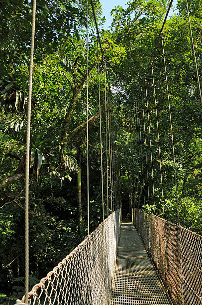 Hanging Bridges in Costa Rica stock photo