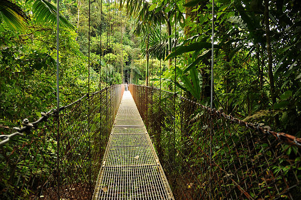 Hanging Bridges in Costa Rica's Arenal National Park stock photo