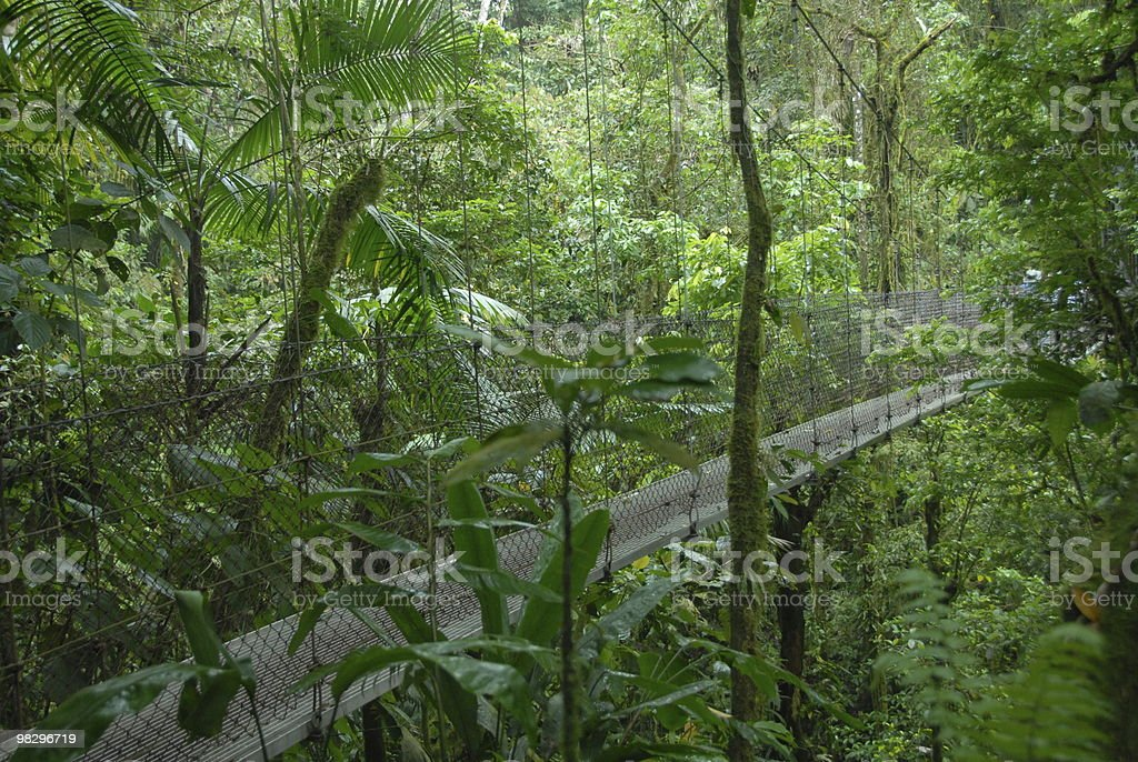 Hanging Bridges royalty-free stock photo