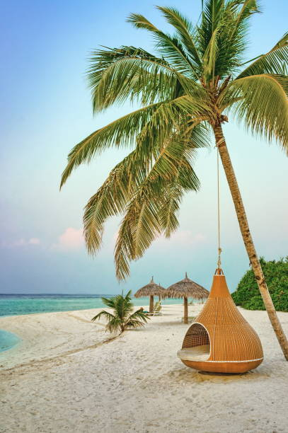 Hanging chair under palm tree on a beach at Maldives resort stock photo
