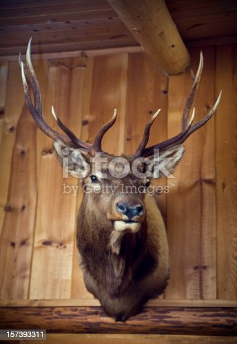 A  stag's head with large antlers mounted on a cabin wall.  Vertical with copy space.