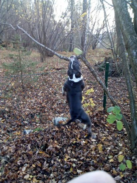 hanging dog stock photo