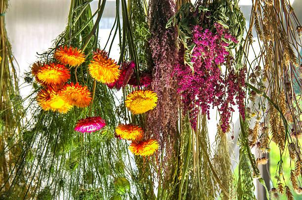hanging trocknen blumen als astilba und strohblumen - orangenscheiben trocknen stock-fotos und bilder