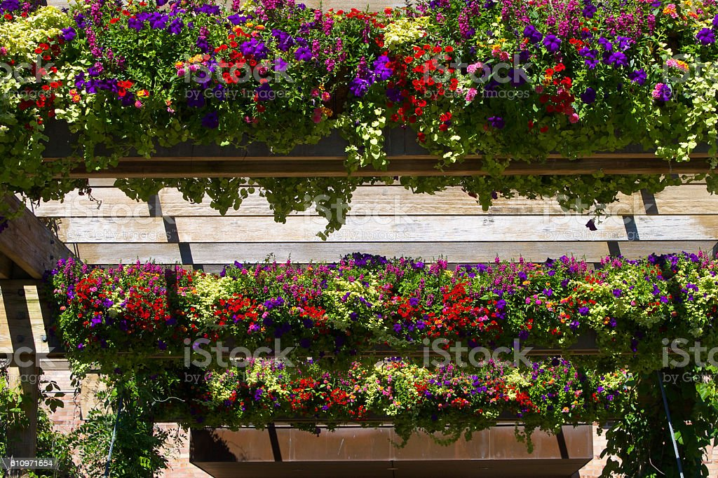 Hanging Flower Baskets stock photo