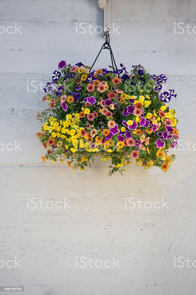 Hanging flower pot with bright flowers - Stock image – Foto