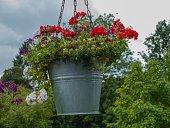 Urban Gardening Flowers
