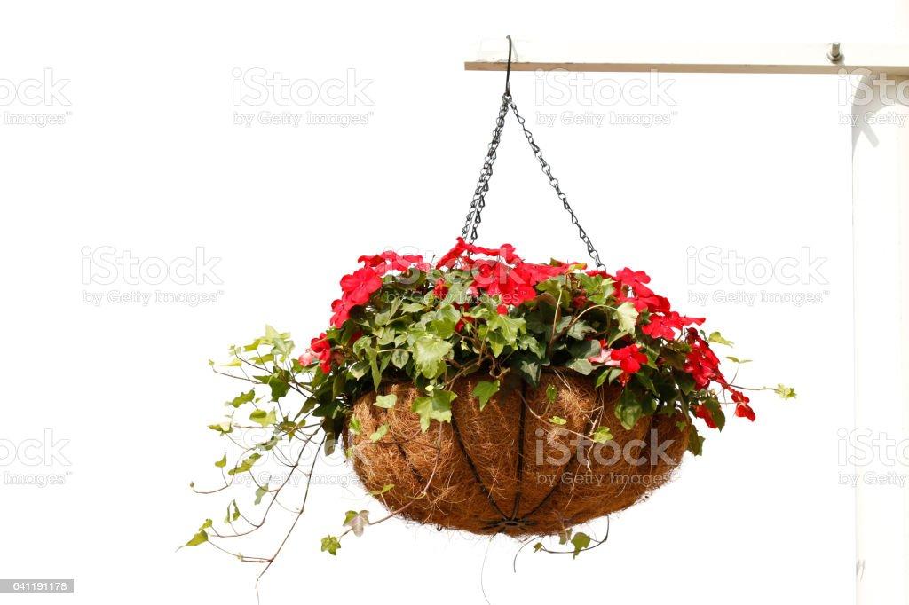 Hanging flowers isolated on white background stock photo